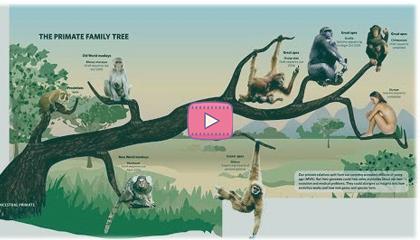 На поколение дальше от обезьяны