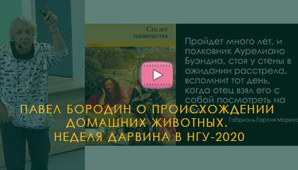 Павел Бородин о происхождении  домашних животных.  Неделя Дарвина в НГУ-2020