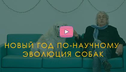 Новый год по-научному. Эволюция собак. Павел Бородин